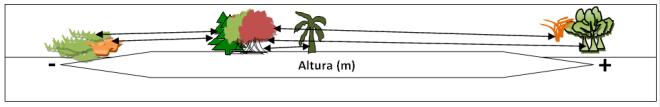 Figura6.png